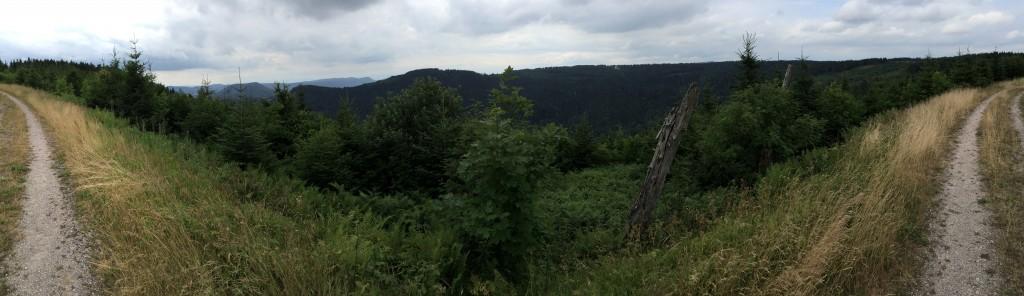 Der Schwarzwald mit seinen hohen Fichten- und Tannenwäldern